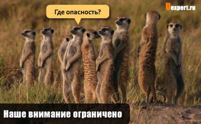 Zastavki-dlya-sai-ta.023-768x475